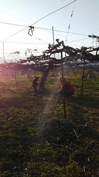 木の根元の草刈り