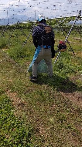 草刈り ビーバー