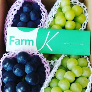 ぶどうの収穫と発送時期について