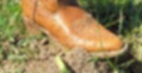 fire ant 3.jpg