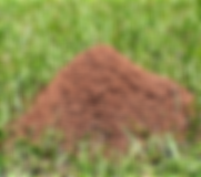 Fire ant pic.png