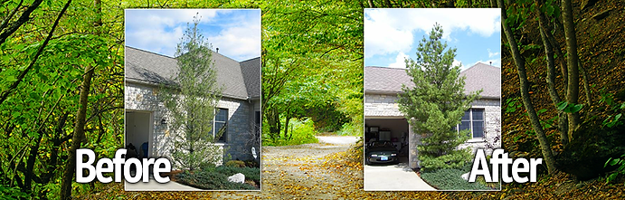 tree and shrub before and after image.pn