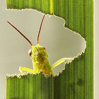 insecticide-01.jpg