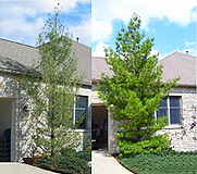 tree and shrub image.png