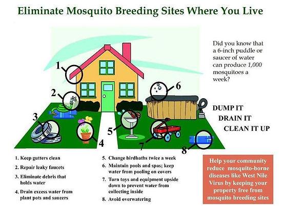 eliminate mosquito pic.jpg