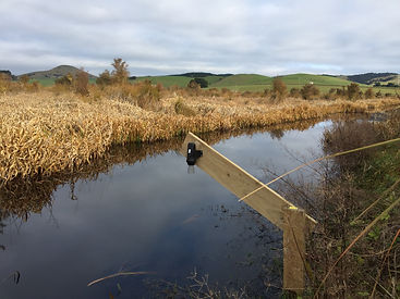 Wetland monitoring Waterwatch