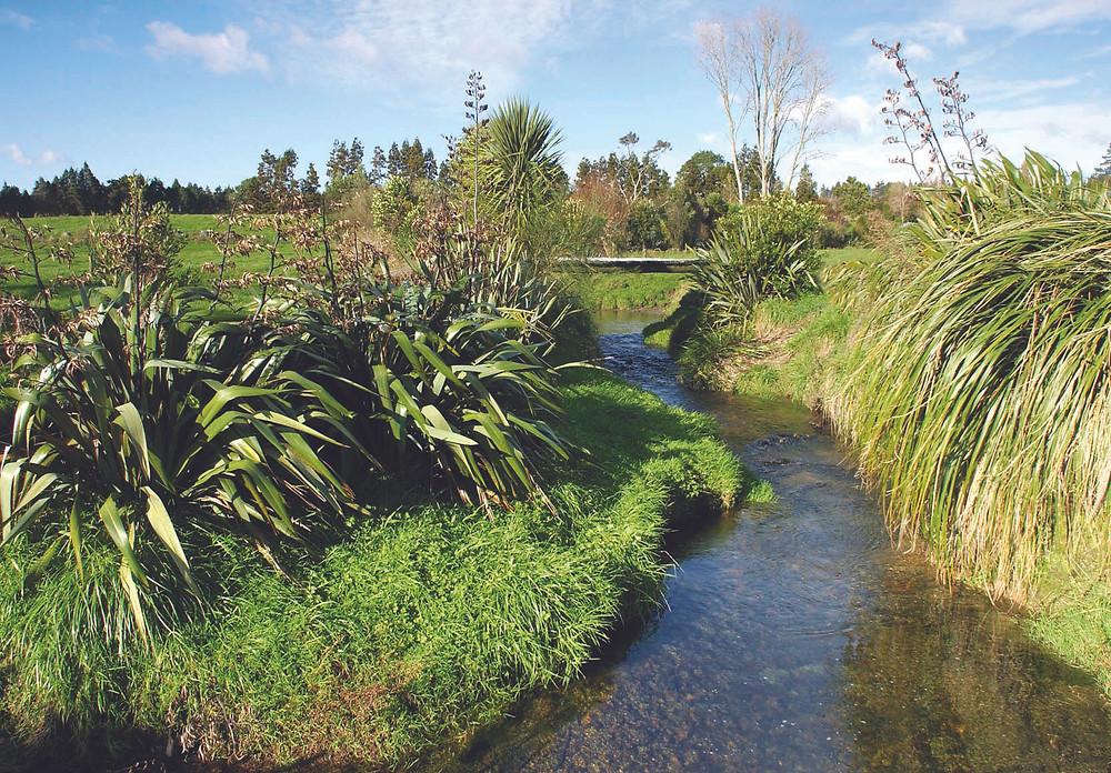 Farm Wetlands NZ