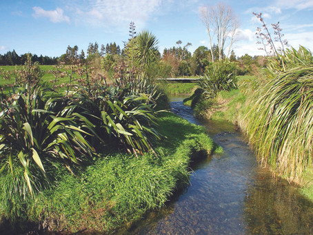 Wetlands - the kidneys of the land.