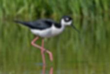 Sinclair Wetlands water levels