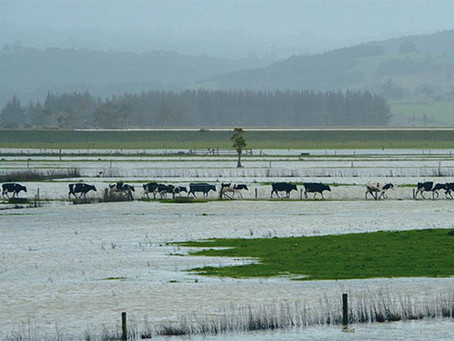 Flooded Farms Becoming More Frequent