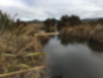 environmental monitoring waterwatch