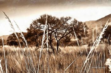 Grassland - sepia