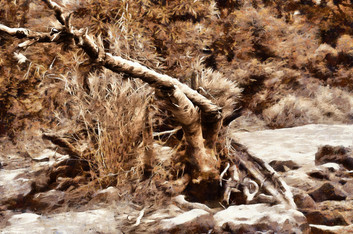 Branches - sepia