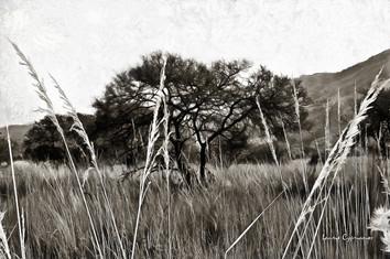 Grassland - B&W