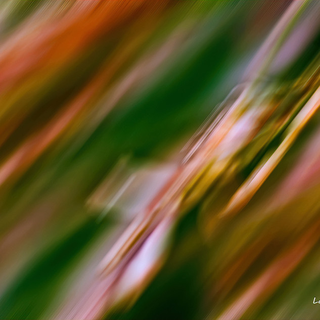 Grasses in the wind