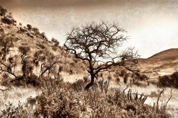 Hillside - sepia