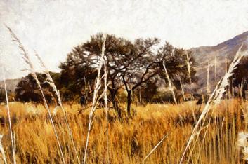 Grassland - color