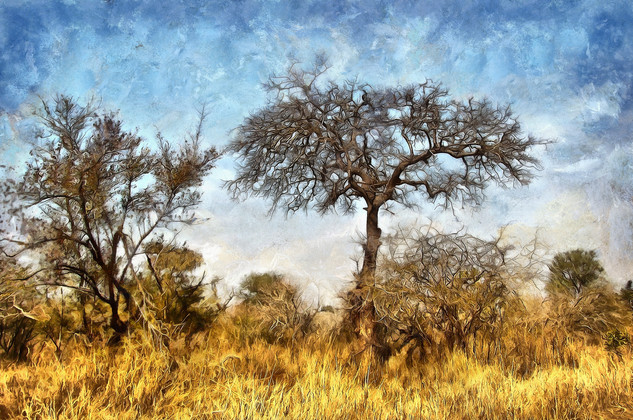 Bushveld trees - color