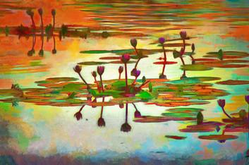 Lily pond gone wild