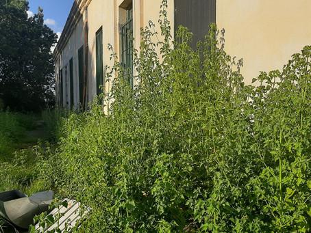 El histórico edificio del ex Jardín N°1, actual Consejo Escolar, en deplorable estado