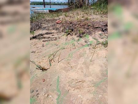 Defensa Civil brinda recomendaciones ante la presencia de toxinas en el Río Paraná