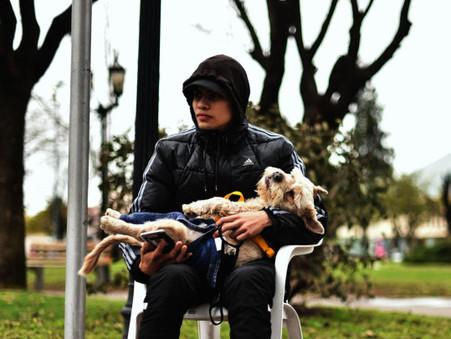 Hasta el viernes, vacunarán mascotas contra la rabia en la Plaza Eduardo Costa