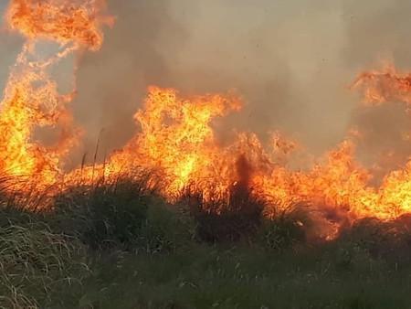 Nuevamente se crearon focos de incendio en el Parque Nacional Ciervo de los Pantanos