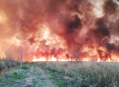 El Frente de Todos-PJ manifestó su preocupación por los incendios en las islas