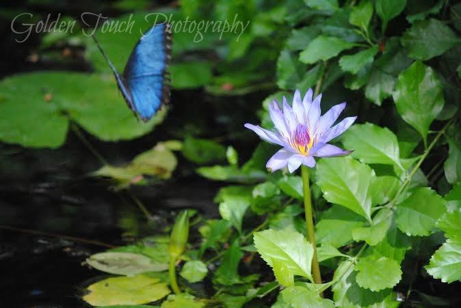 Butterfly Bye