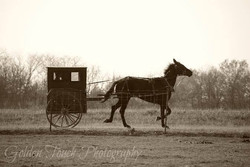 Amish Way