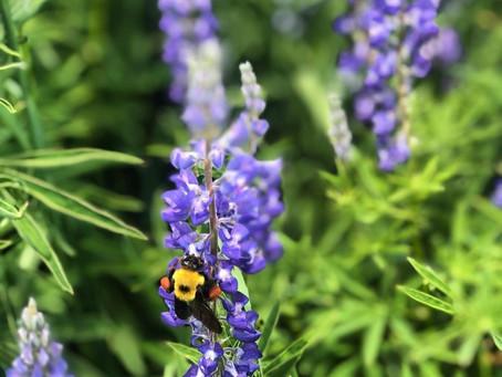 Animal Medicine: Bee
