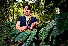Harvesting-Coffee-1024x683.jpg