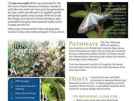 PEST ALERT – Box Tree Moth