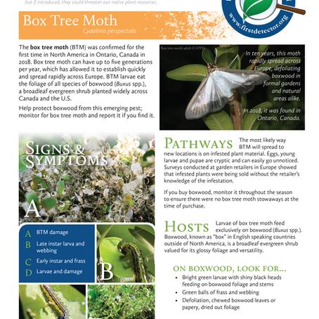 PEST ALERT –Box Tree Moth