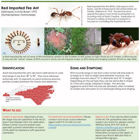 PEST ALERT –Red Imported Fire Ant