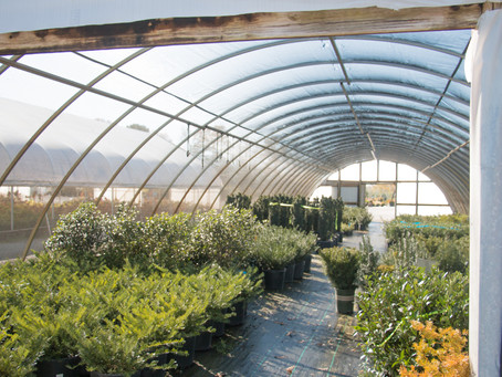Nursery Terms Explained: A Quick Guide to Shopping for Plants at a Nursery