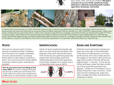 PEST ALERT – Asian Longhorned Beetle