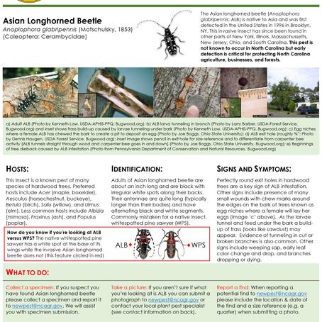PEST ALERT –Asian Longhorned Beetle