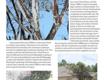 PEST ALERT –Crape Myrtle Bark Scale