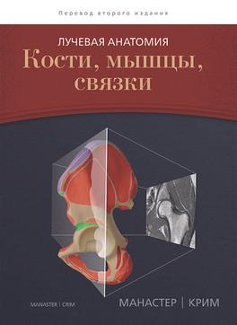 Лучевая анатомия. Кости, мышцы, связки