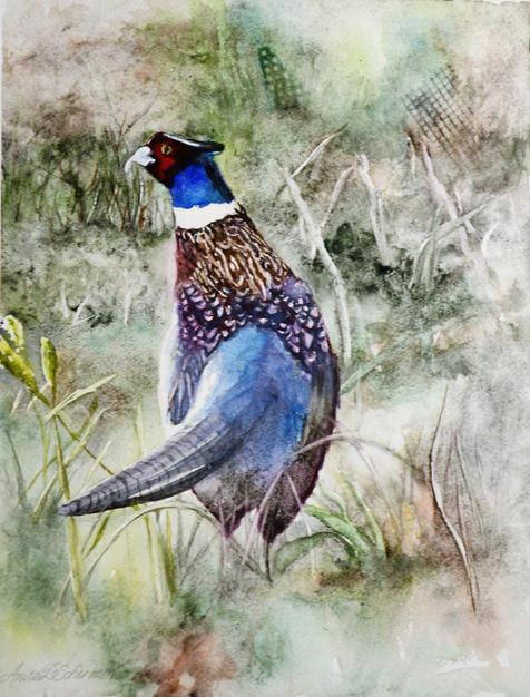 20. Ring-Necked Pheasant