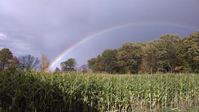 Rainbow at the Farm.jpg