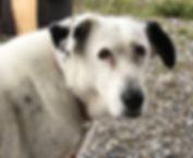 Jessy-lost-dog-1280x640.jpg