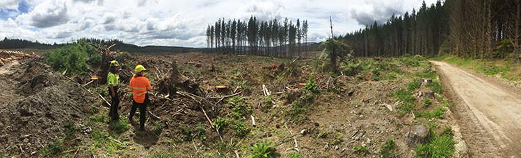 Jensen Logging Operations in Kaingaroa Forest