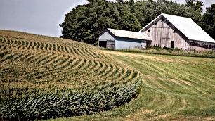 مزرعة للبيع مساحتها 4 دونمات مشجرة ومسيجة بالكامل بسعر مغري من المالك