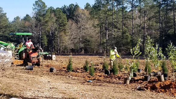Trees and Shrubs Being Planted
