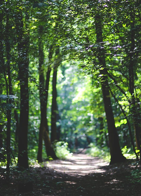 nature-forest-trees-path_edited.jpg