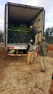 Trees Have Arrived!