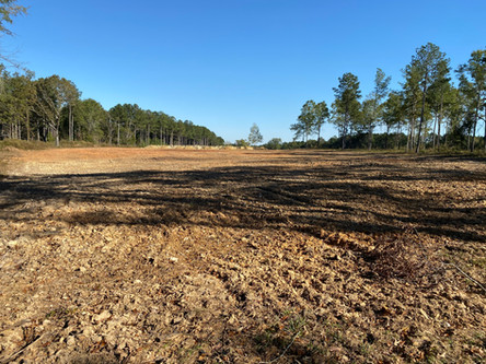Tilled Ground For Tree Farm