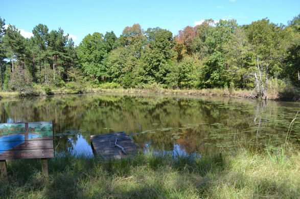 Catfish Pond